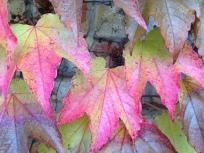 noch mehr Herbstfarben